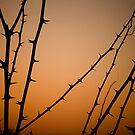 A WINTER SILHOUETTE  by June Ferrol