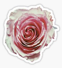Faded Pink Rose Sticker