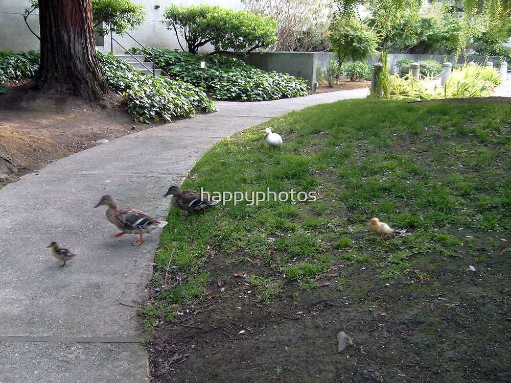 ducks by happyphotos