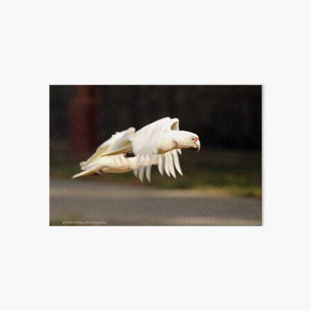 Long-billed Corella  (1051) Art Board Print