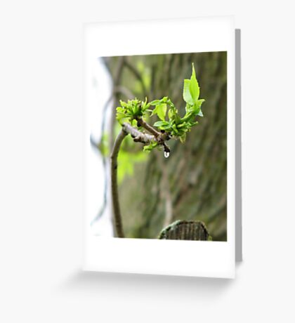 Lady of the Wood Greeting Card