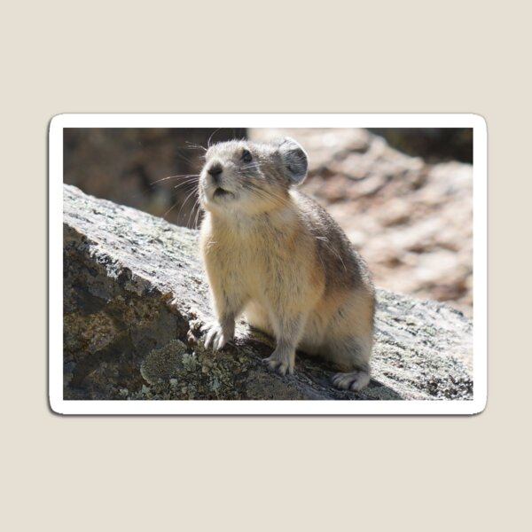 The Adorable Pika Magnet