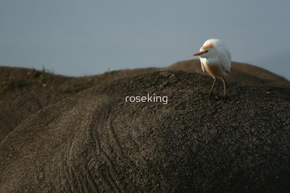 bird on an elephants back by roseking