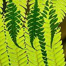 Ferns Overlay by Eric Cook