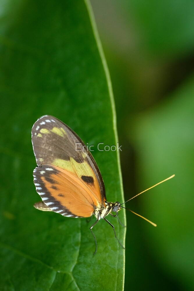 Butterly on a Leaf by Eric Cook