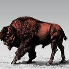 Buffalo by karmabees