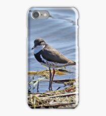 Red-kneed Dotterel  (311) iPhone Case/Skin