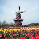 Holland Tulip Festival by mikrin