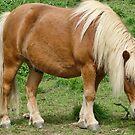 Small Horse by lynn carter