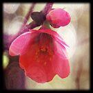 In Bloom by Natalie Bollinger