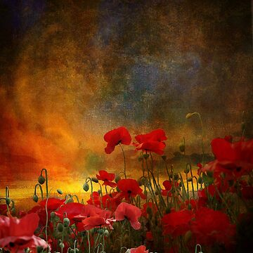 Phil's Poppies by ImagesFX