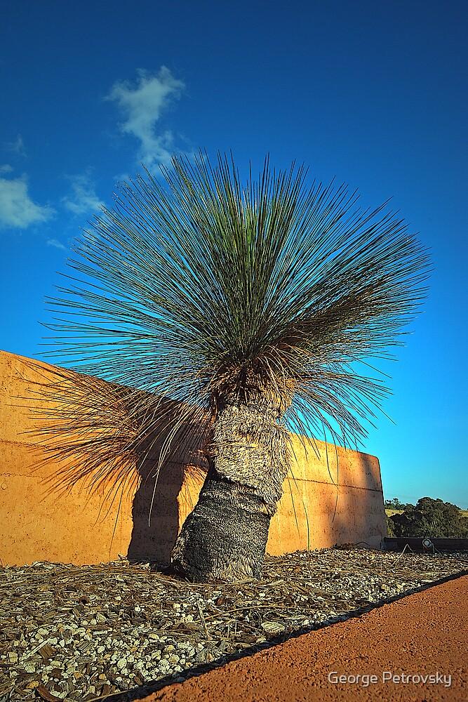 Mt Annan Grass Tree by George Petrovsky