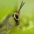 young grasshopper by lensbaby