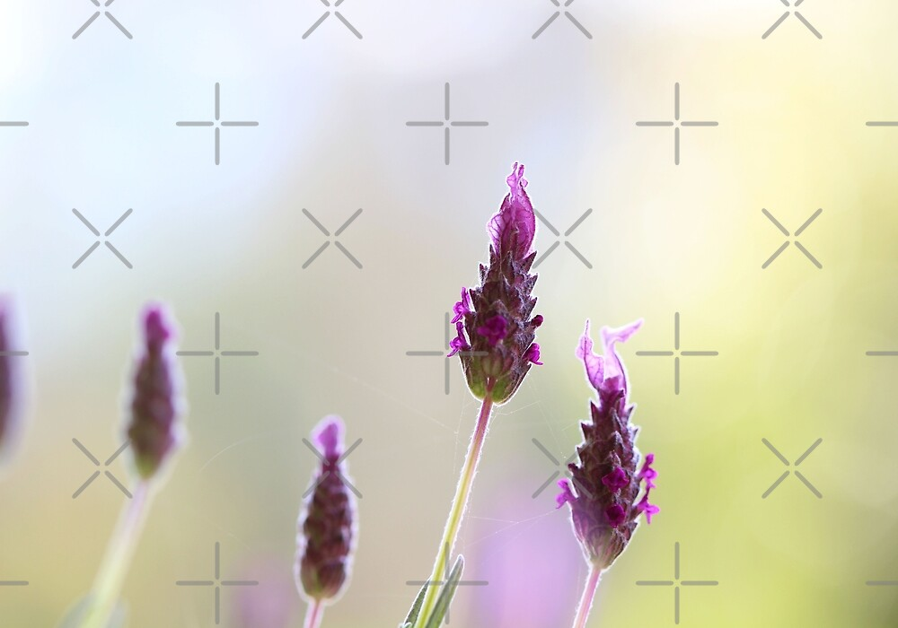 Purple Whisper by Cosmic Fox  Photography