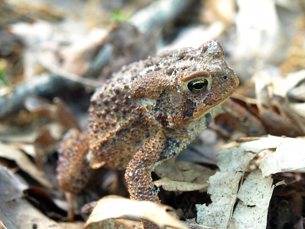 Toad by JThill
