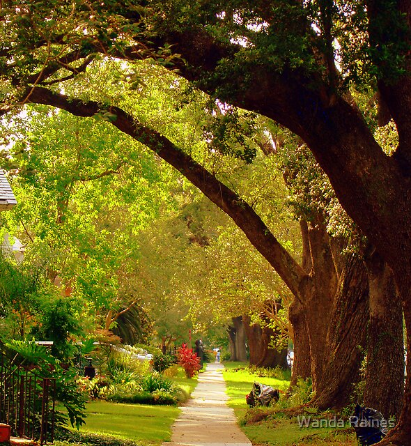 New Orleans Neighbor Hood Sidewalk by Wanda Raines