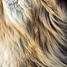 Golden Retriever Fur by illustrateme