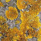 Lichen by illustrateme