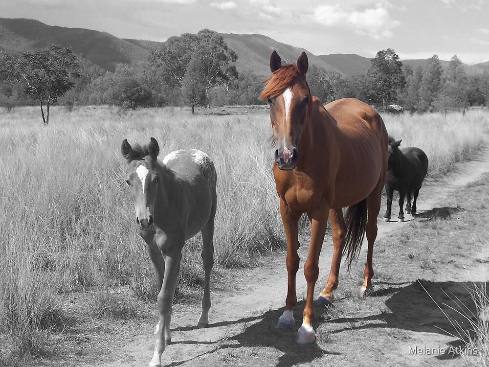 horses by Melanie Atkins