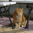 cat under the bench by dorka31