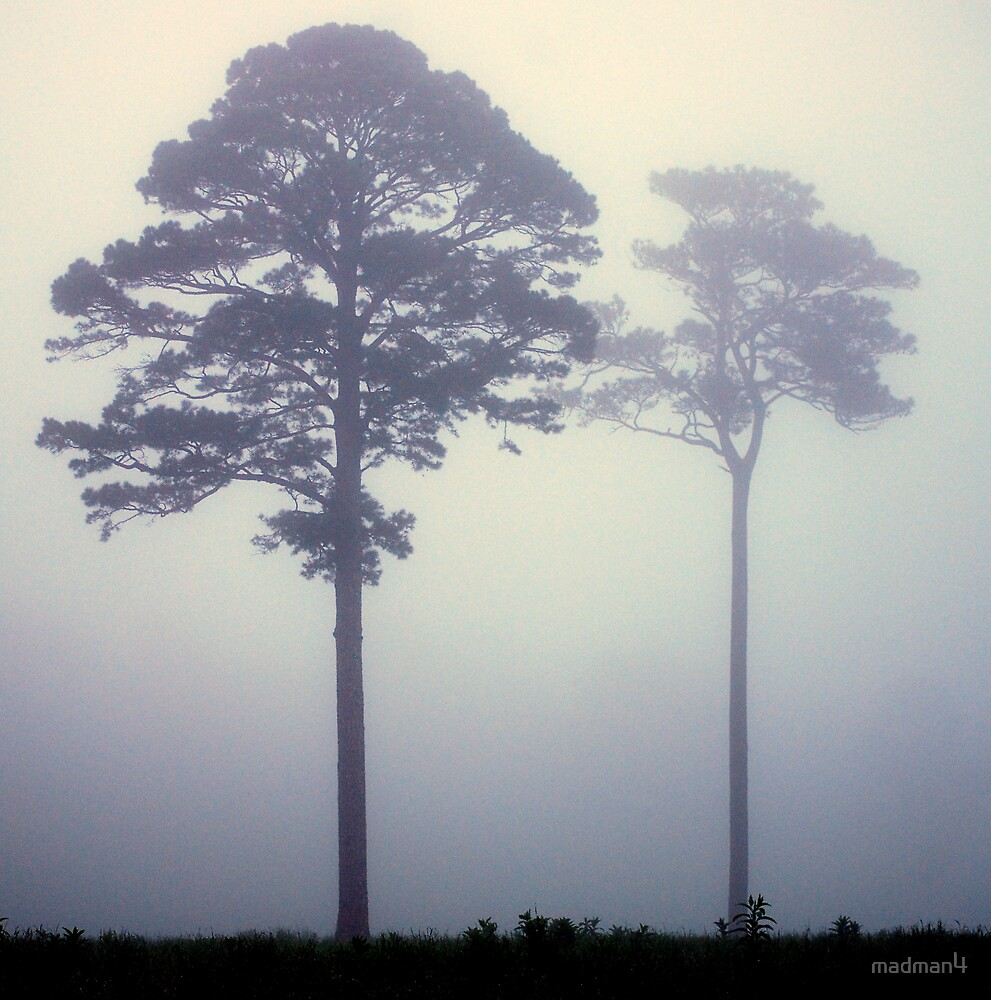 Foggy Pasture Giants by madman4