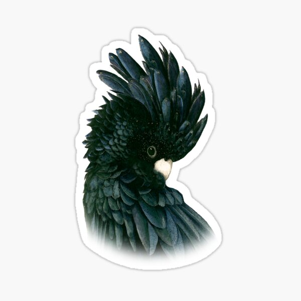 Black Cockatoo 2 Sticker