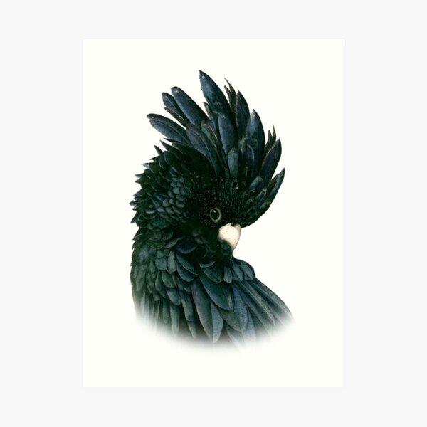 Black Cockatoo 2 Art Print