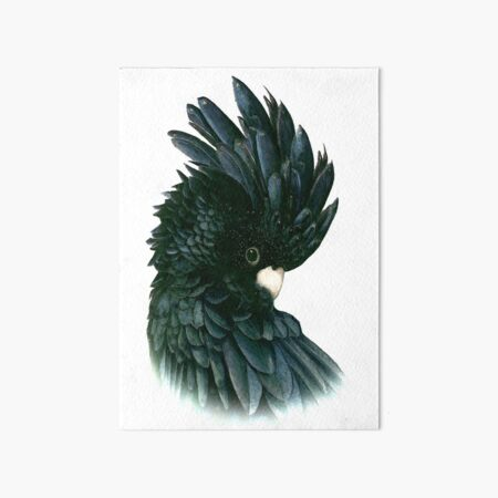 Black Cockatoo 2 Art Board Print