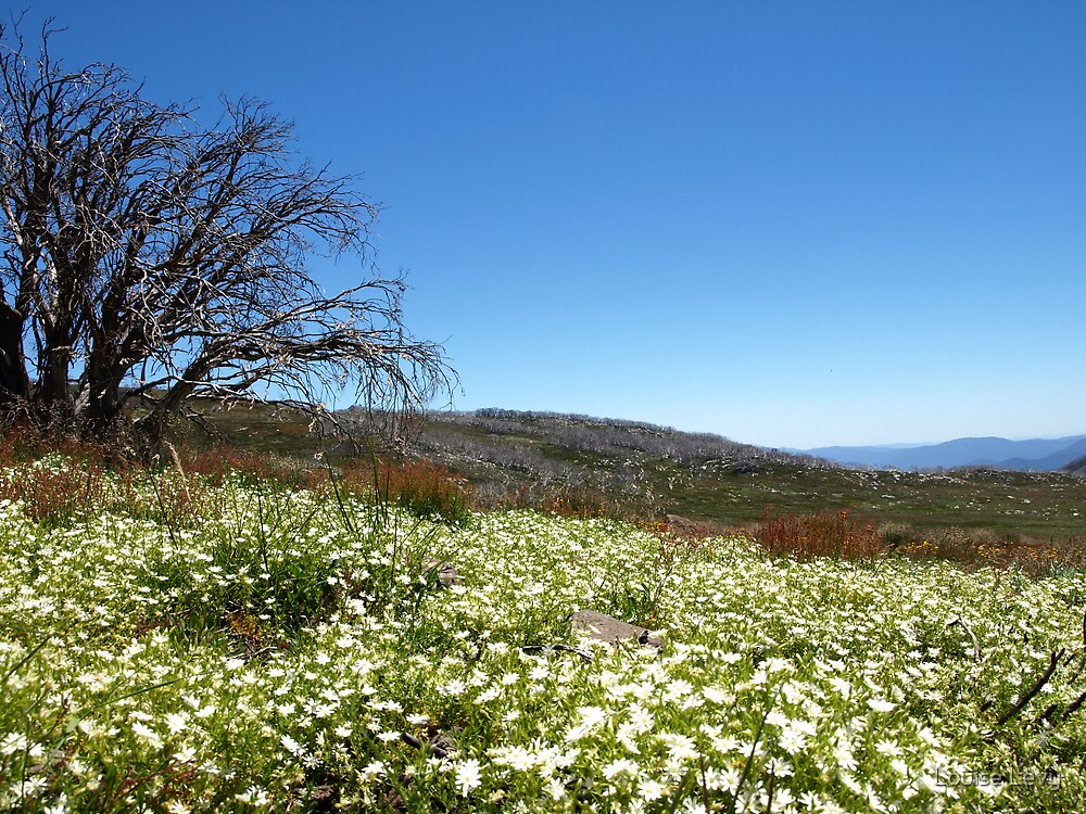 A Carpet of Wild Flowers by Louise Levy