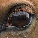 A horses view by kmargetts
