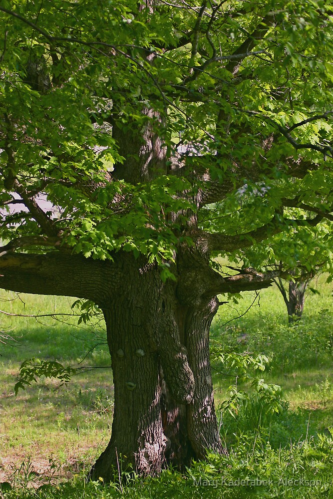 Old Oak in the Spring by Mary Kaderabek-Aleckson
