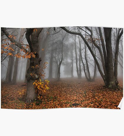 The last of the autumn leaves Poster