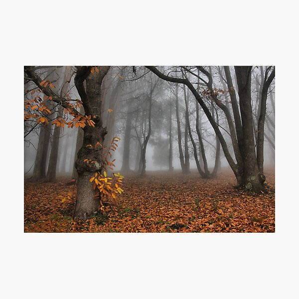 The last of the autumn leaves Photographic Print