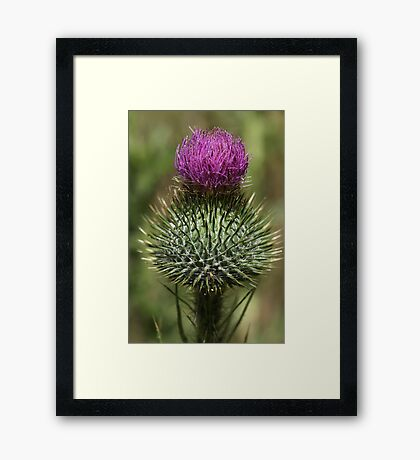 Super Spiky Framed Print
