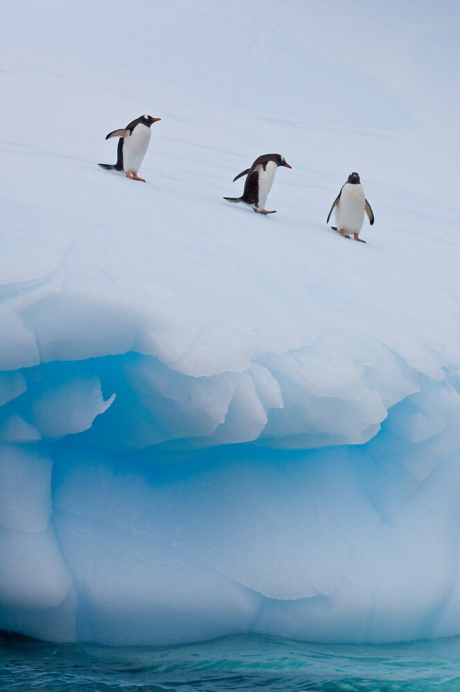 Penguins, Ice & Water by Simon Coates