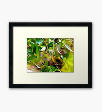 Wilson's Warbler - Splash of Color Framed Print