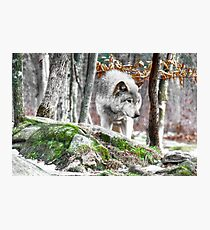 The Forest Hunter Photographic Print