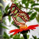Malachite Butterfly by Larry Trupp