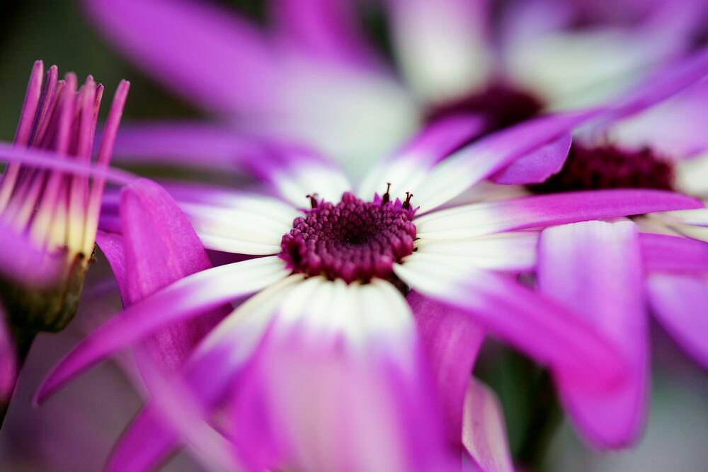 Purple Splash by neatimages