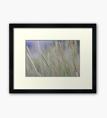 It's all gold what shimmers Framed Print