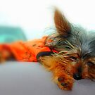 Nap Time by Grinch/R. Pross