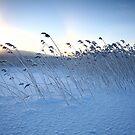 « Winter calmness » par Päivi  Valkonen