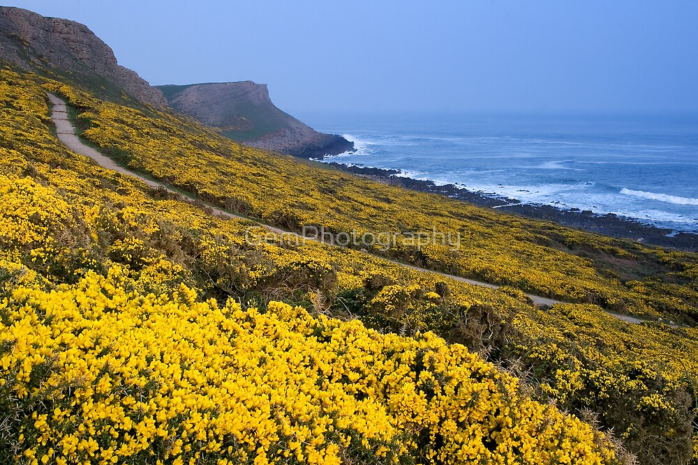GORSE COAST by GemPhotography