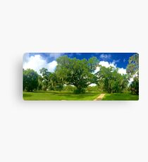 City Park Live Oak Canvas Print