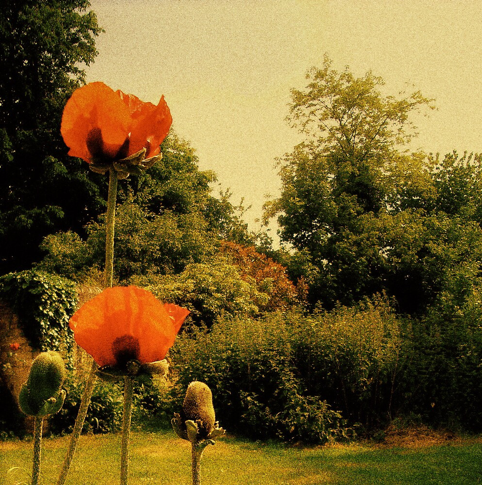 Poppies In Sunlight 02 by Kate Towers IPA