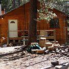 Cabin by Trace Lowe