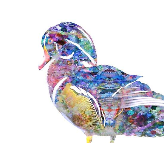 Wood Duck by mrthink
