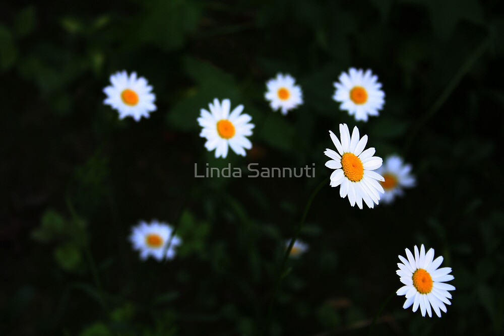 sunshine 3 by Linda Sannuti