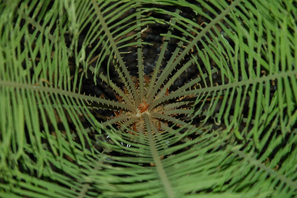 Plant Patterns by Ian McKenzie