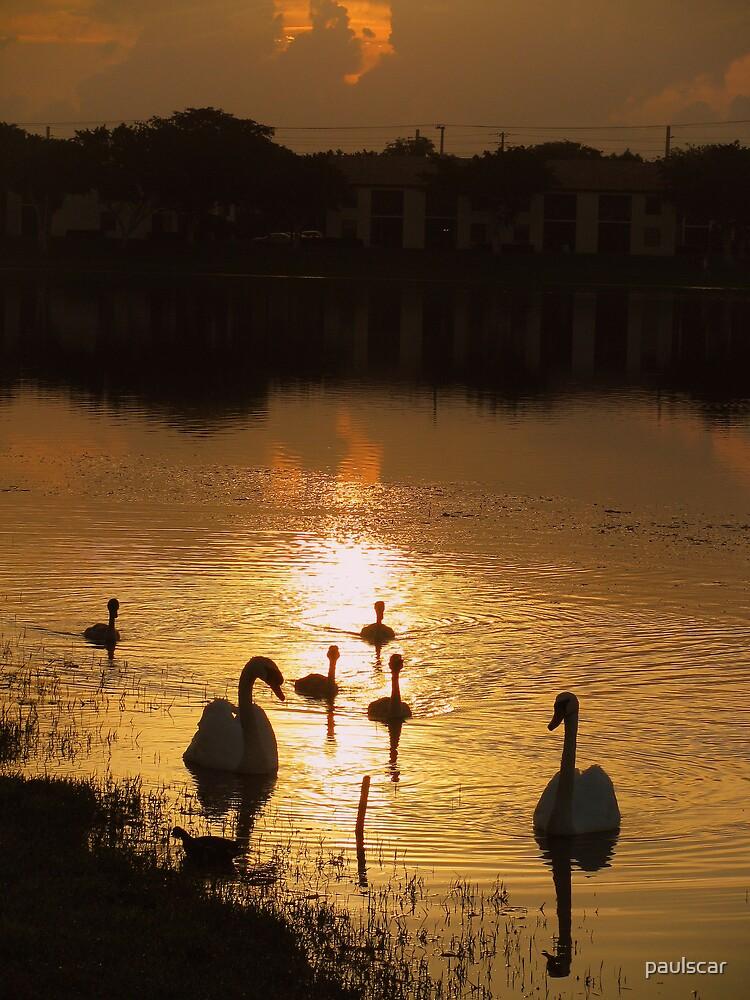 swan family sunrise by paulscar